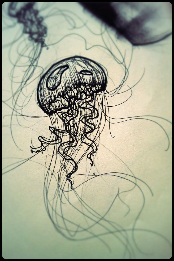 Simple Jellyfish Drawing At Getdrawings Com Free For Personal Use