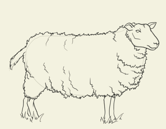 700x545 How To Draw Sheep