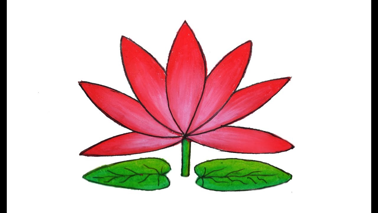 Simple lily drawing at getdrawings free for personal use 1280x720 how to draw water lily easy and simple shapla ful art izmirmasajfo