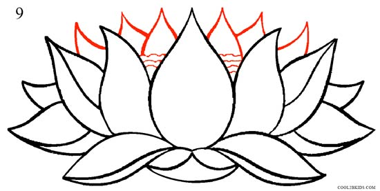 550x277 How To Draw Lotus Flower (Step By Step Pictures) Cool2bkids