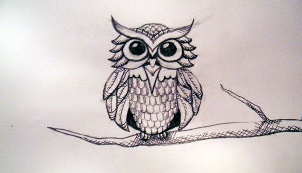 how to draw a owl on a branch