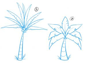 302x218 How To Draw How To Draw Palm Trees