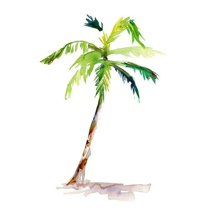650x700 Simple Palm Tree Drawing Aidias Palm Tree Drawing