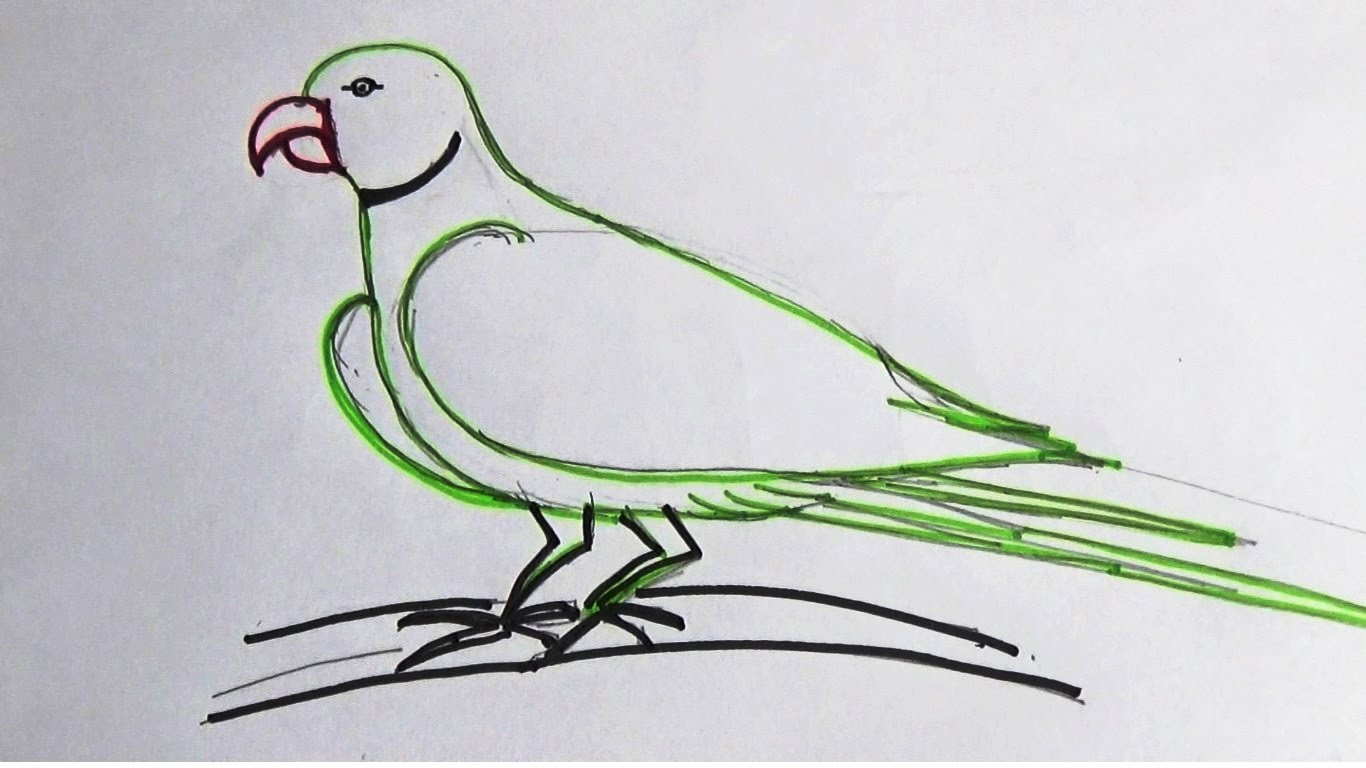 Simple Parrot Drawing At Getdrawings Com Free For Personal Use