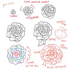 236x233 How To Draw A Peony, Peony Flower, Step By Step, Flowers, Pop