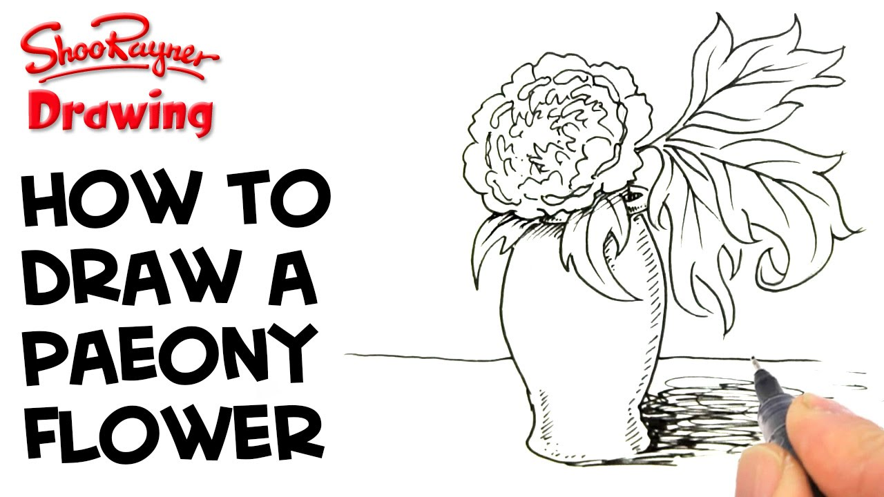 1280x720 How To Draw A Paeony