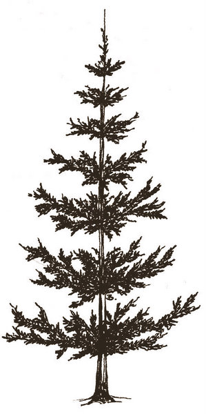 Simple Pine Tree Drawing at GetDrawings.com | Free for ...
