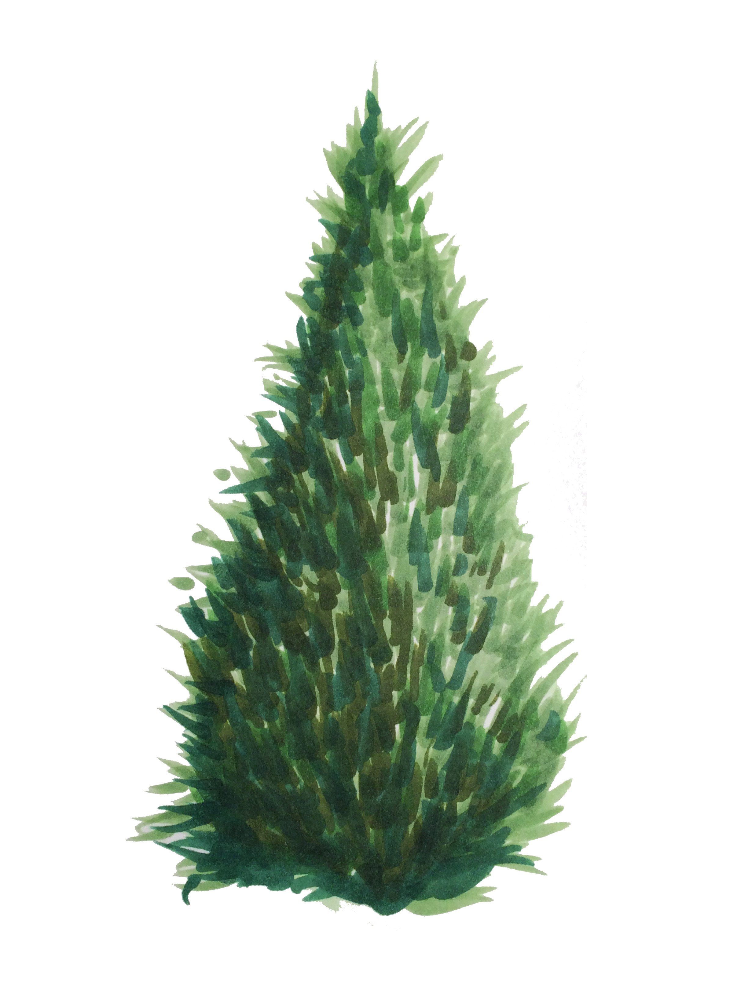 2448x3264 Copic Inspire Marker Drawings, Fir Tree And Copic