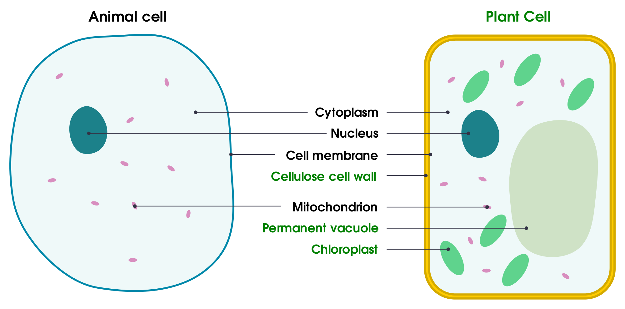 Simple plant cell drawing at getdrawings free for personal use 2000x988 filesimple diagram of yeast cell eng ccuart Image collections