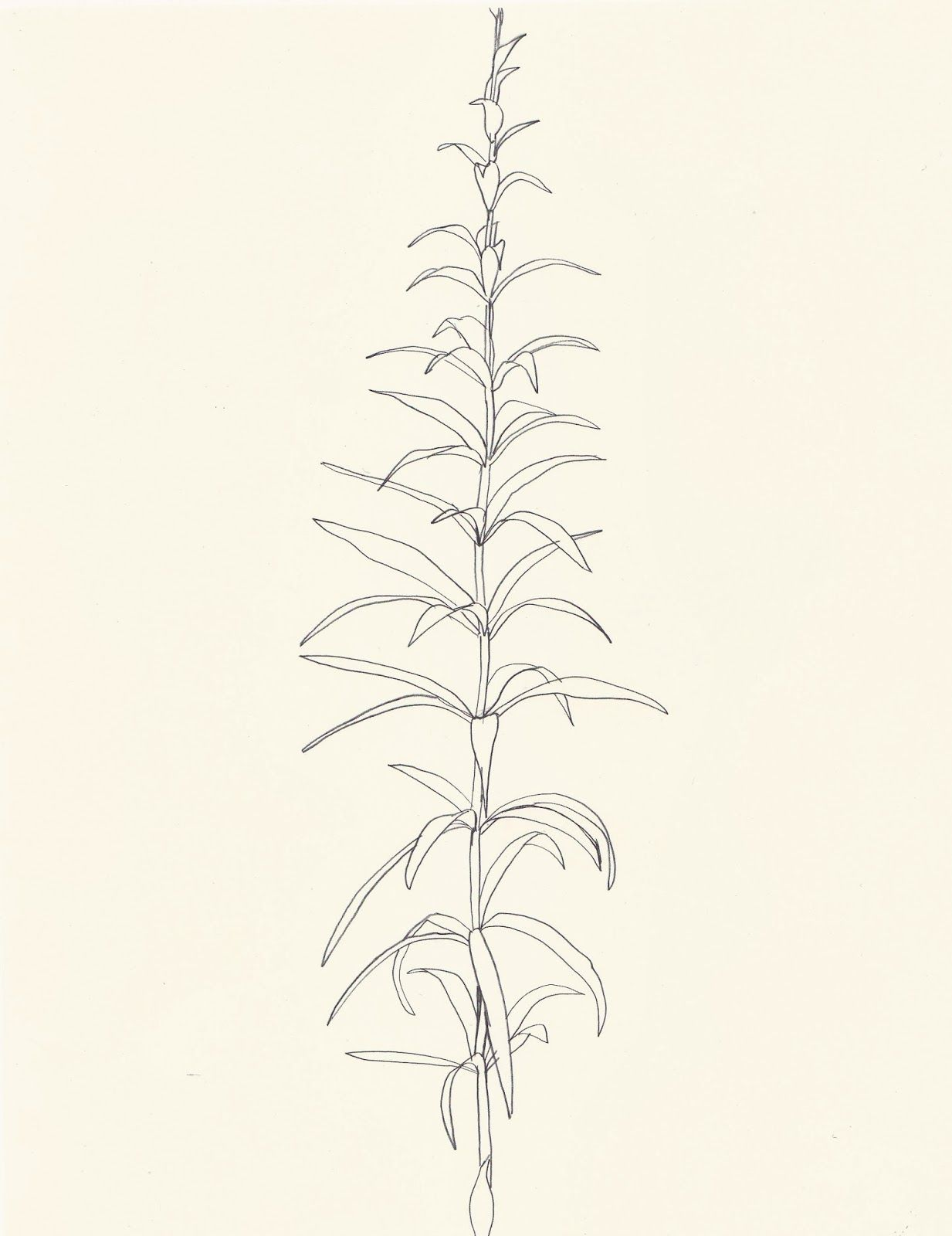 Simple Plant Drawing At Getdrawingscom Free For Personal
