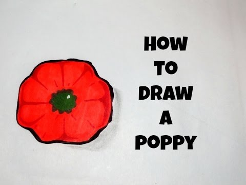 480x360 How To Draw A Simple Poppy