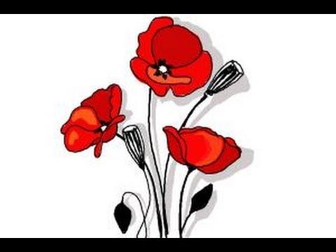 480x360 How To Draw A Poppy