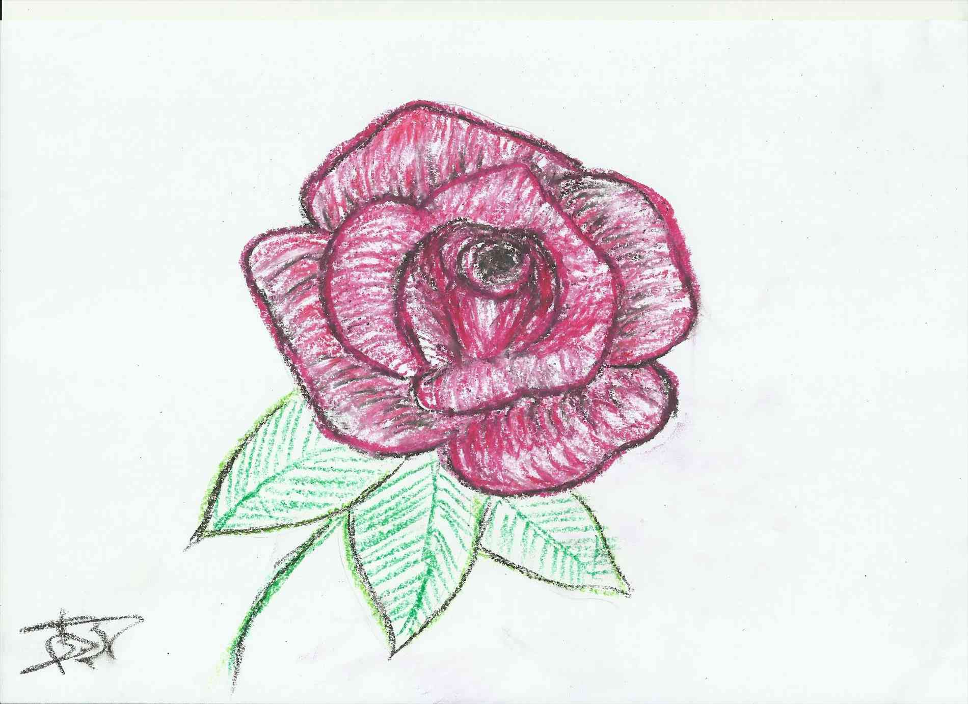 1900x1382 Easy To Draw Rose Flower Drawings Of Roses Easy. How To Draw