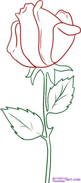 278x623 How To Draw A Rose How To Draw Simple Rose, Rose