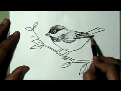 480x360 How To Draw A Beautiful Sparrow Sitting On Branch Yzarts