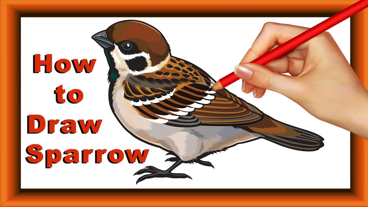 1280x720 Step By Step How To Draw And Color Sparrow For Kidssimple