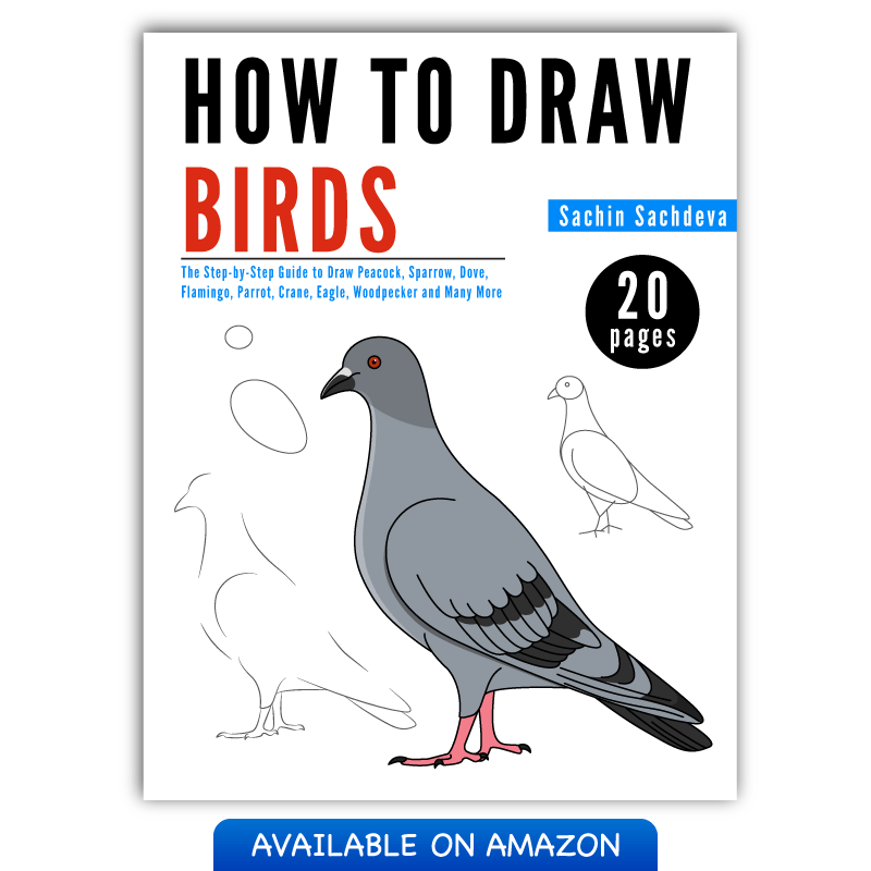 800x800 The Step By Step Guide To Draw Birds For Kids Inky Treasure