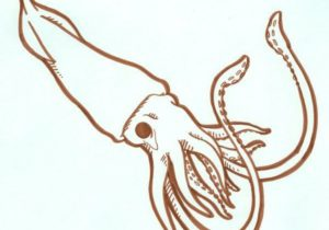 300x210 48 Fresh Pictures Of Easy Octopus Drawing Drawing Ideas