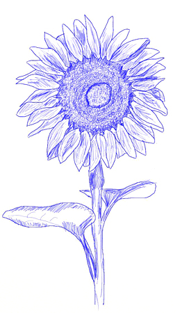 259x450 How To Draw A Sunflower