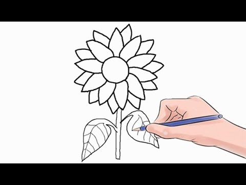 480x360 How To Draw A Sunflower Easy Step By Step
