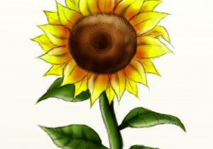 300x210 Sun Flower Drawing Sunflower Drawing Images How To Draw