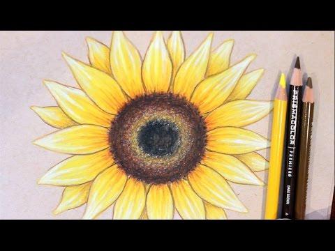 480x360 Sunflower Drawing Tutorial