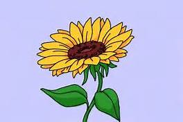 264x176 Simple Drawing Sunflower