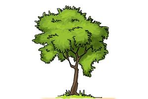 300x200 How To Draw A Simple Tree
