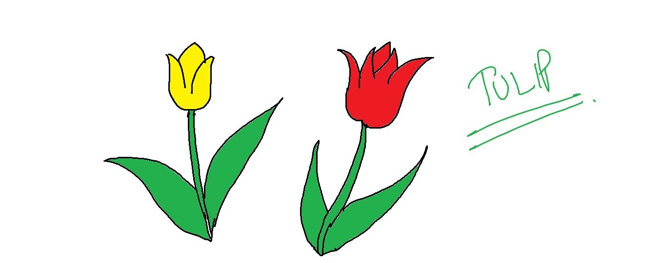 1359x540 Easy Kids Drawing Lessons How To Draw Cartoon Tulip Flower