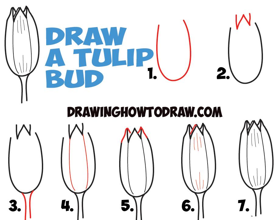 908x725 How To Draw Tulips