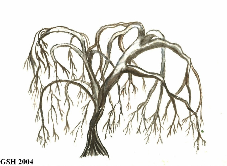 how to draw a willow tree step by step