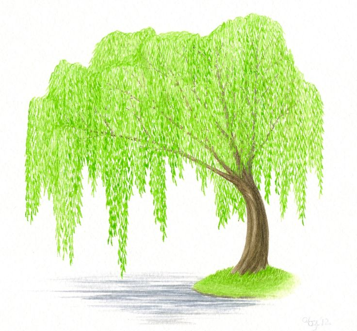 how to draw a willow tree easy