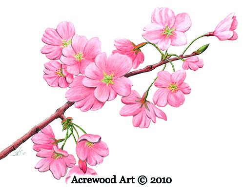 500x400 Cherry Blossoms As A Symbol For Fibromyalgia Fibromyalgia Coach