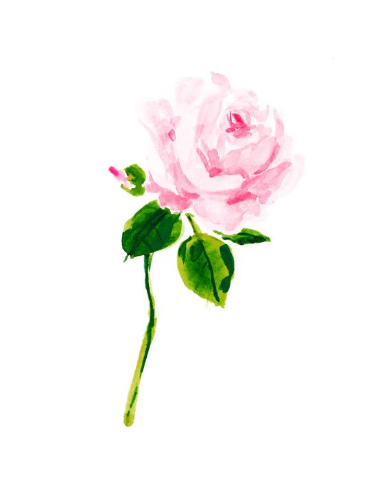 570x713 A Single Rose Art Print A Thing Created Single
