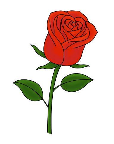 383x484 How To Draw Roses