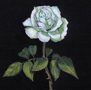 300x296 Single Rose Drawings Pixels