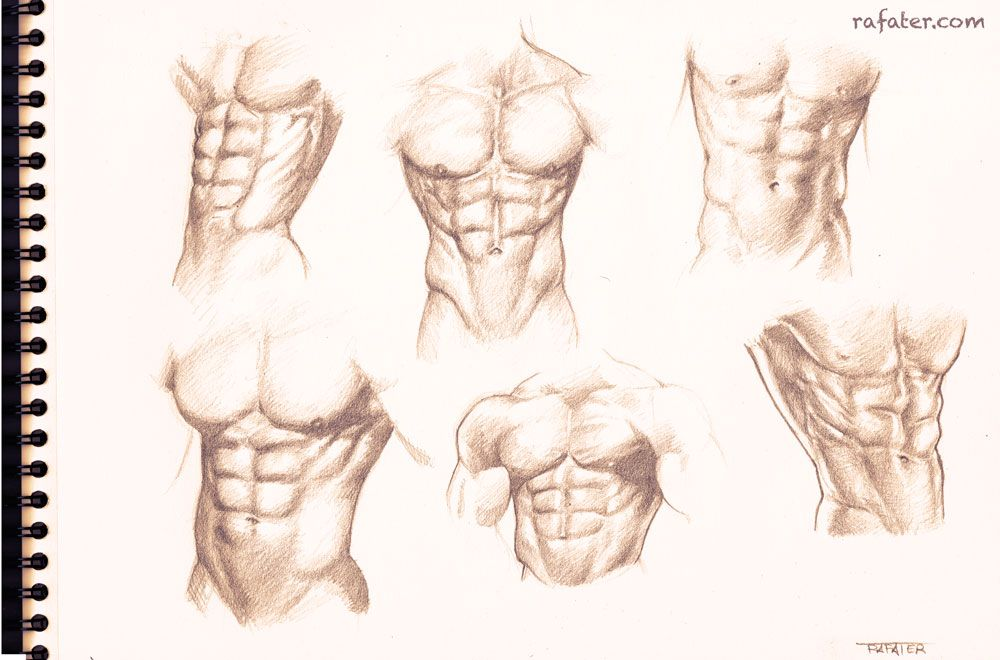 1000x660 Male Torso Study For The Six Pack Lovers By