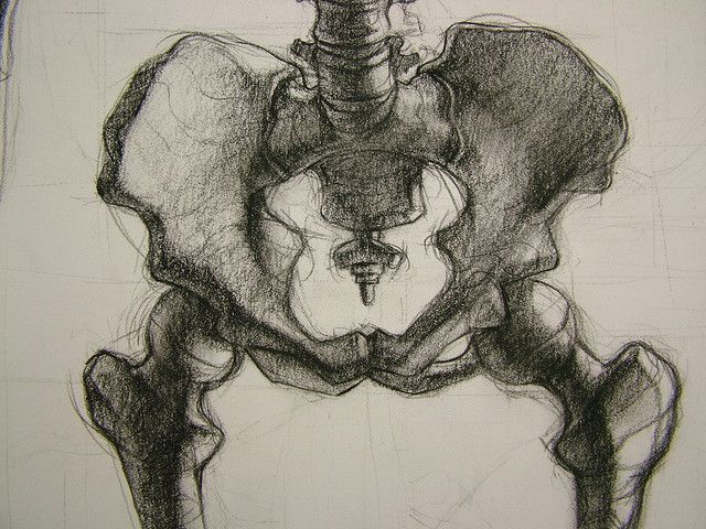 640x480 13 Best Skeletal Drawing Examples Images On Skulls
