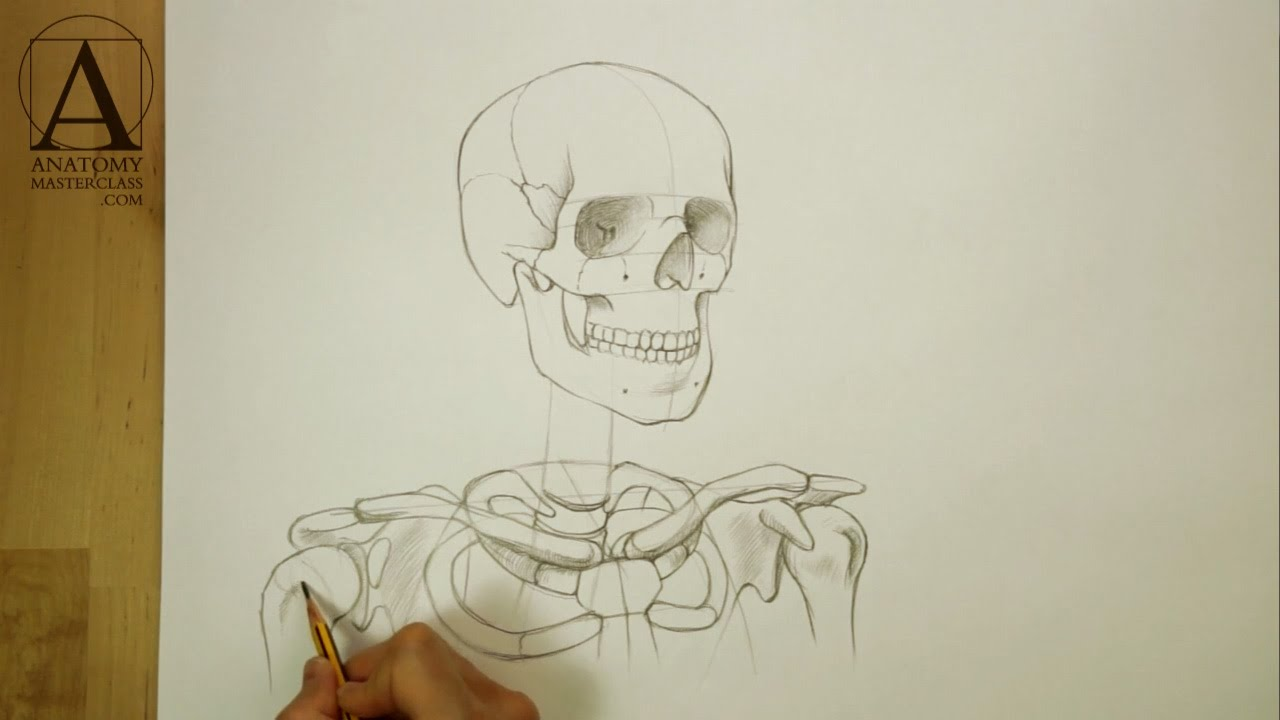 1280x720 Head, Neck And Shoulders Skeletal Anatomy