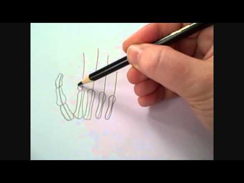 480x360 How To Draw A Skeleton Hand