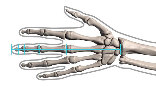 600x338 How To Draw Hand Bones