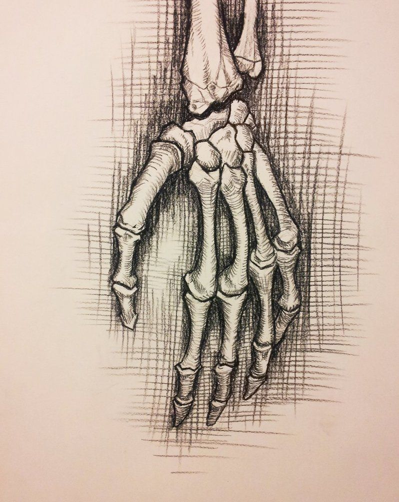 Skeletal Hand Drawing At Getdrawings Free For Personal Use