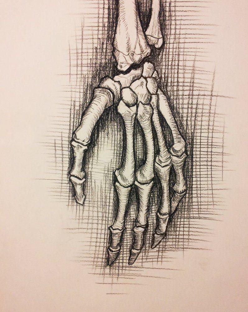 798x1002 Anatomy Study Skeleton Hand By Richardblumenstein 2