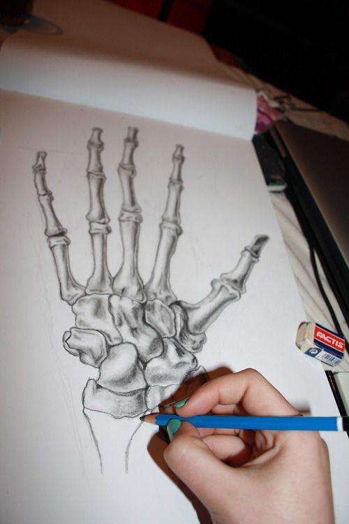 500x750 Skeleton Hand Drawing