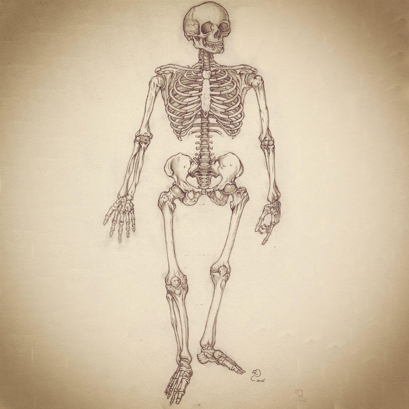 1592x1592 Pencil Sketch Of Skeletal System Art Sketches
