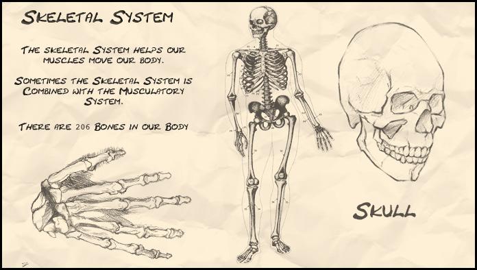696x394 Skeletal System