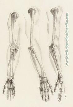 236x347 Image Result For Skeleton Arm Reference Anatomy Basics Challenge