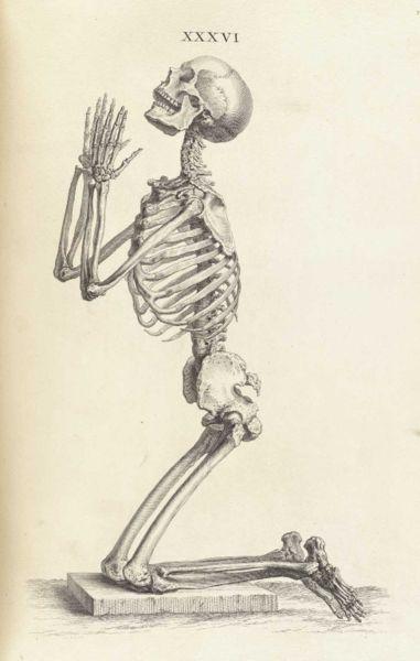 381x600 Skeleton, Kneeling Title Osteographia, Or Anatomy