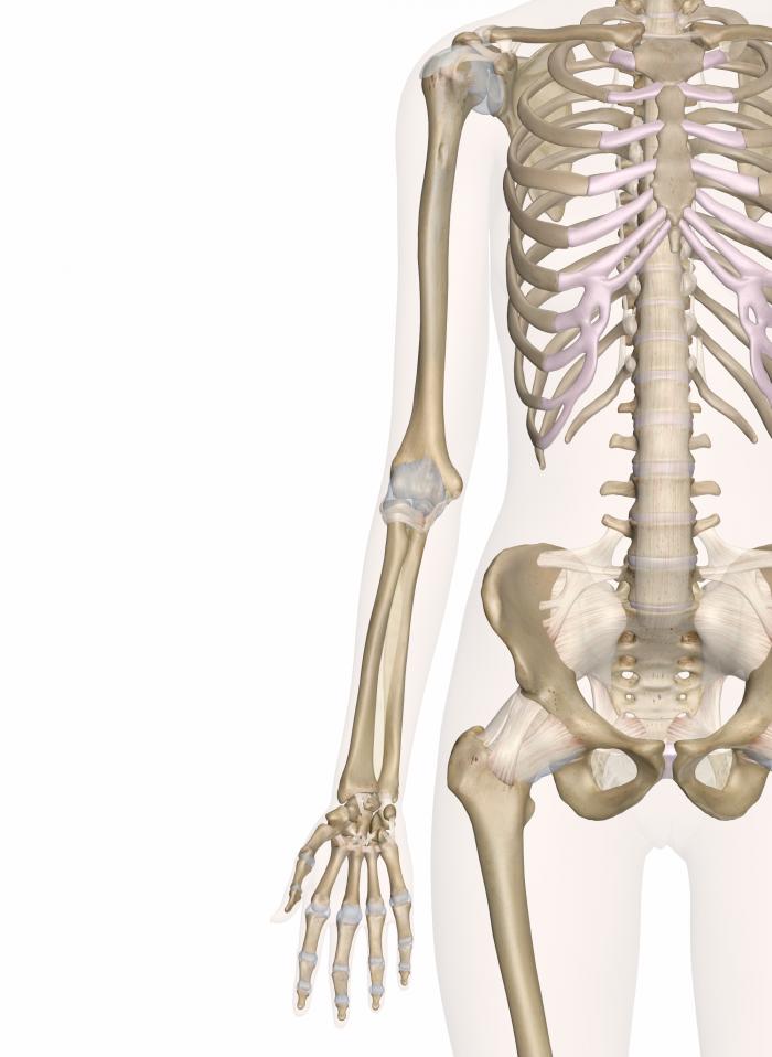 700x958 Skeleton Arm Group