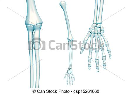 450x320 Skeleton Arm Skeleton Arm On White Background Stock Illustration